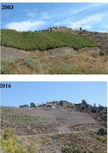 Expansión de la superficie de regadío en la Comarca de la Axarquía
