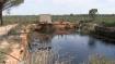 Robo del Agua en Doñana